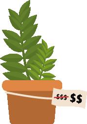 rapiboy planta sobre maceta con su precio tachado para mostrar uno con una unidad de $ menos